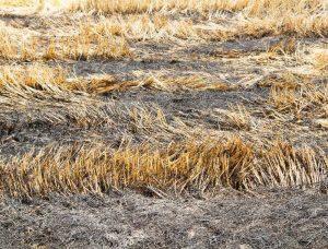 Рядом с Дели 11 тепловых электростанций будут сжигать гранулы из биомассы вместе с углем